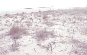 A un click de cambiar la playa de Tamarit con Carrefour