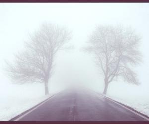 ¿Por qué se forma el fenómeno de la niebla?